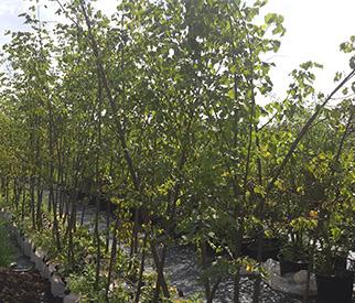 Восстановление газона с проплешинами, подсеивание, пересев, заплатки